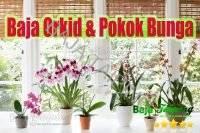 Baja Orkid