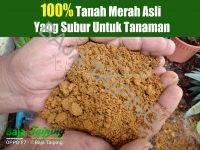 Top Soil Tanah Untuk Tanaman